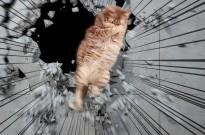 日本网友找朋友给自家猫P了一下,好像从漫画里出来的一样