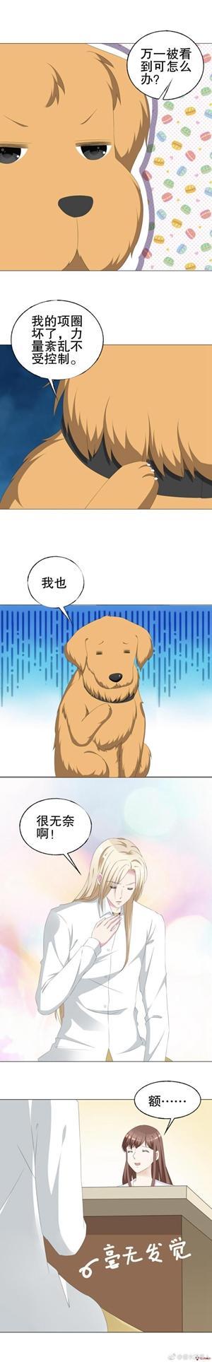攻略帖:七夕节,如何拥有一个属于自己的犬系男友?