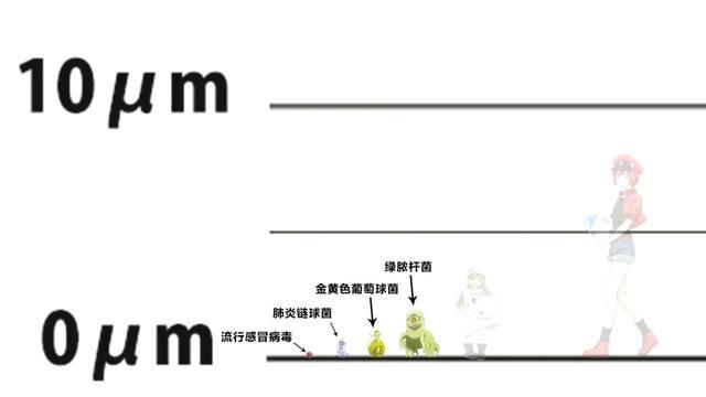 日本网友绘制《工作细胞》登场角色真实大小,巨噬细胞原来这么大