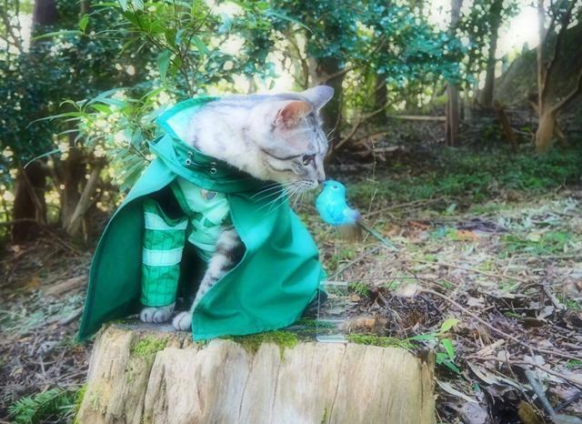 日本网友给自家猫穿上COS服,这些角色你认得全么?
